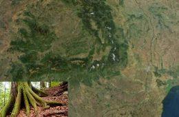 pădurile din Romania