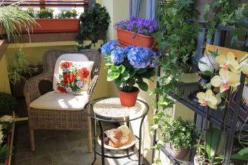 Înfrumusețare balcon cu flori