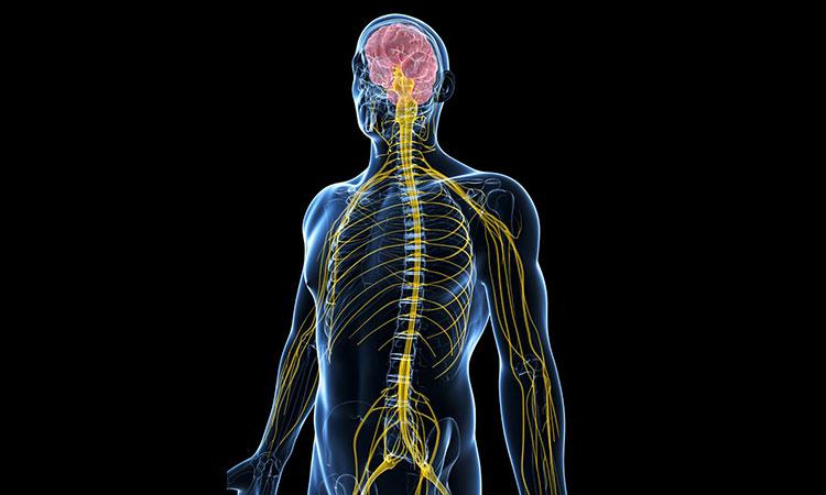 stresul este o afectiune a sistemului nervos