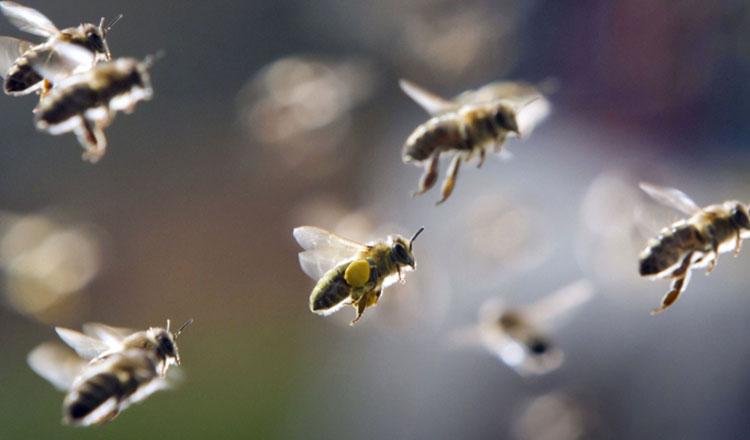 despre albina