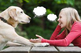 sicutiile cu cainii si botezarea masiinii sunt semn de inteligenta