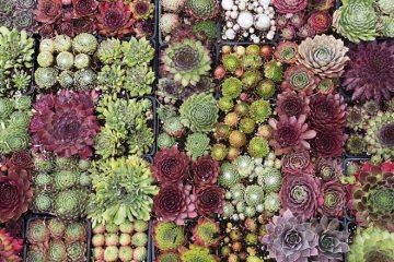 Plante rezistente