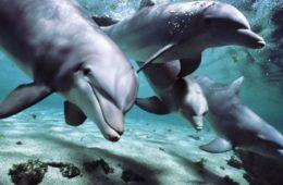 Delfinii sunt unici