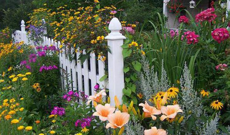 Ruga florilor