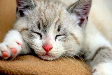 pisica provoaca emoti