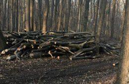 Dezastru în Pădurea Băneasa