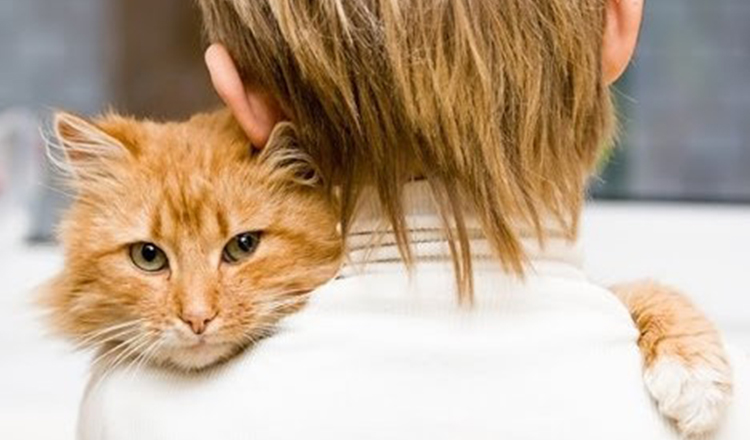 Cum ne ajută pisica